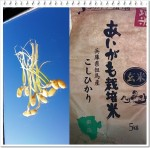 ドセ+ハーセプチン 4クール目 ~乳がんと食生活~