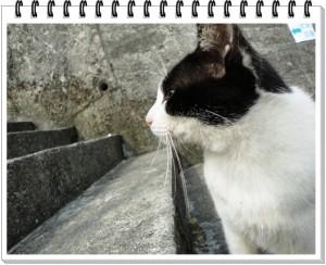 cat_001