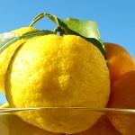 柚子の種をポリポリ ~抗がん作用~