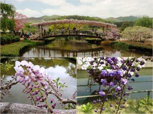 ashikaga flowerpark-02