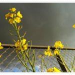 初!花粉症と中耳炎のダブルパンチ