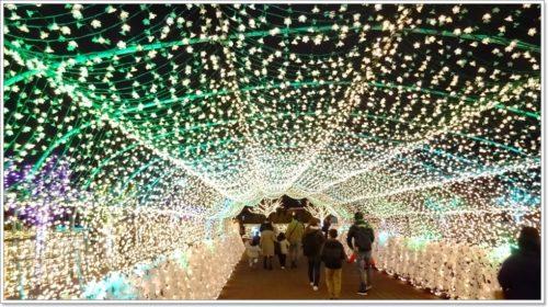 大井競馬場2019ライトアップ