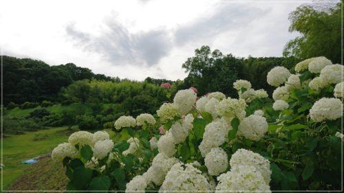 町田里山ベリー園 風景